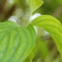 leafy green bokeh