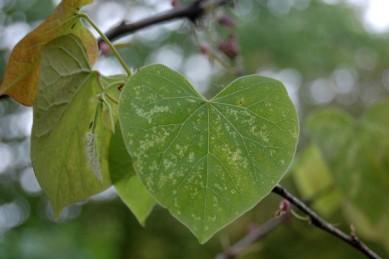 Leaf love.
