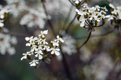I love tiny delicate flowers