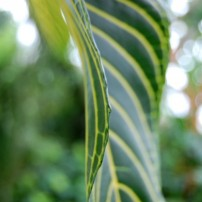 I love the huge leaves in the indoor conservatory.
