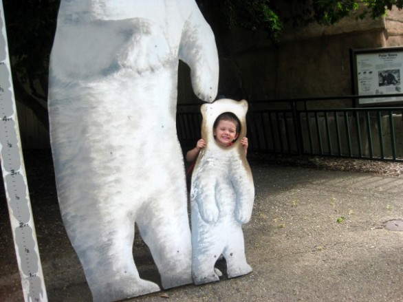 Another polar bear pic.