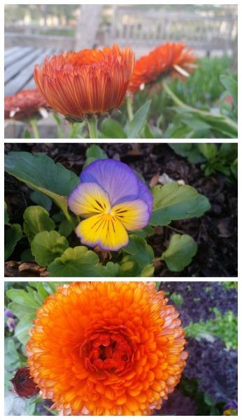 botanicalcolors