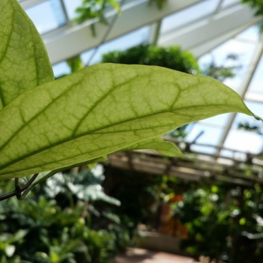 looking up in the indoor conservatory