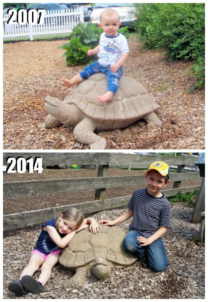 turtle-thenandnow